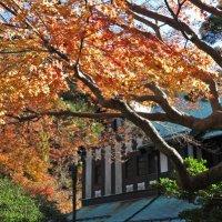 平成29年(2017年)12月10日(土)旧華頂宮邸の紅葉。