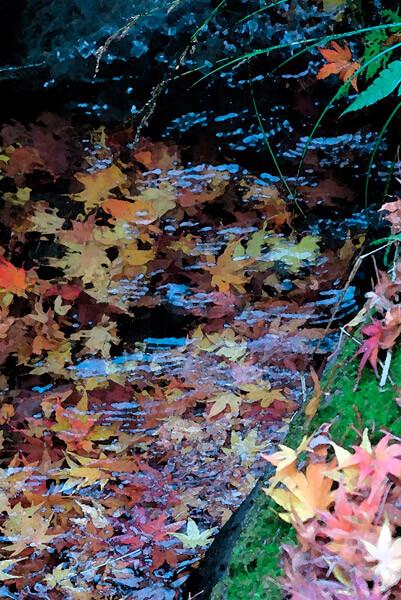 平成29年(2017年)12月10日(土)、一条恵観山荘の紅葉。