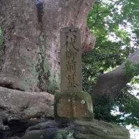 六代御前の墓。樹高8m、幹周り500cmの立派な欅(けやき)がそびえています。