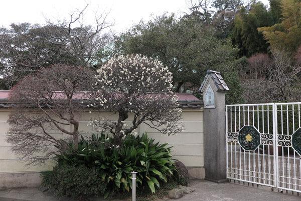 平成30年2月8日(木)、英勝寺の梅