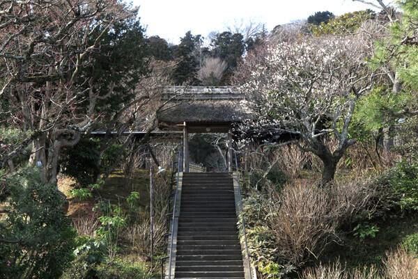 平成30年(2018年)2月16日(金)、東慶寺の梅