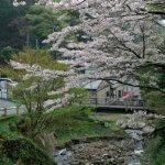 大山詣の出発点、第二駐車場付近。きれいな桜でした。【大山阿夫利神社】