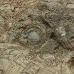 大山阿夫利神社本社への巡礼登山道にある牡丹岩。足元の岩が牡丹の花のようにみえます。【大山阿夫利神社】