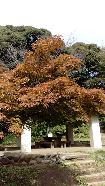 平成28年(2016年)10月29日、源氏山の紅葉。