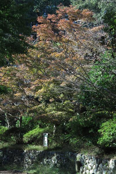 平成30年(2018年)10月29日、源氏山の紅葉。