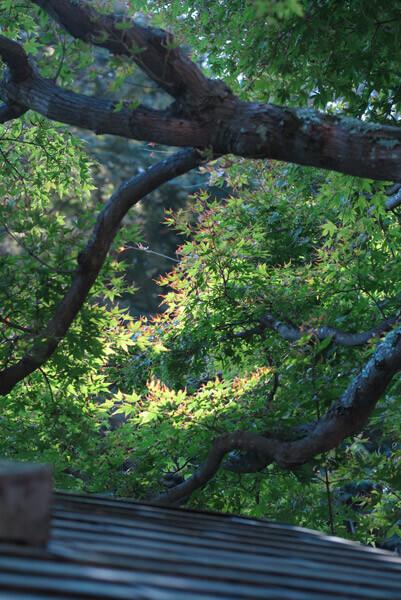 平成30年(2018年)10月29日、東慶寺の紅葉。