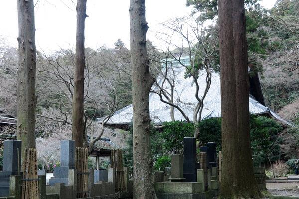 平成31年(2019年)2月12日の妙本寺