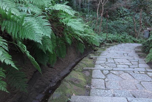 平成31年(2019年)2月12日の瑞泉寺。シダは寒くても青々としています。
