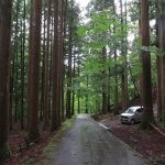 「兜岩」とその周辺。手入れの行き届いた杉が見事。惚れ惚れします。
