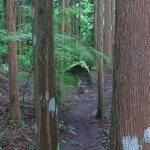 道志村にある「兜岩」。源頼朝がこの岩に兜を置いて休んだと伝わります。