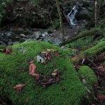 兜岩から試し切り石へと向かう鳥屋の沢林道。ここはとても苔がきれいです。