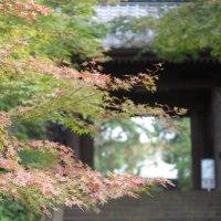 令和元年(2019年)11月11日(月)、円覚寺の紅葉。