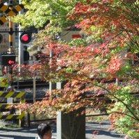 令和元年(2019年)11月19日、円覚寺の紅葉。